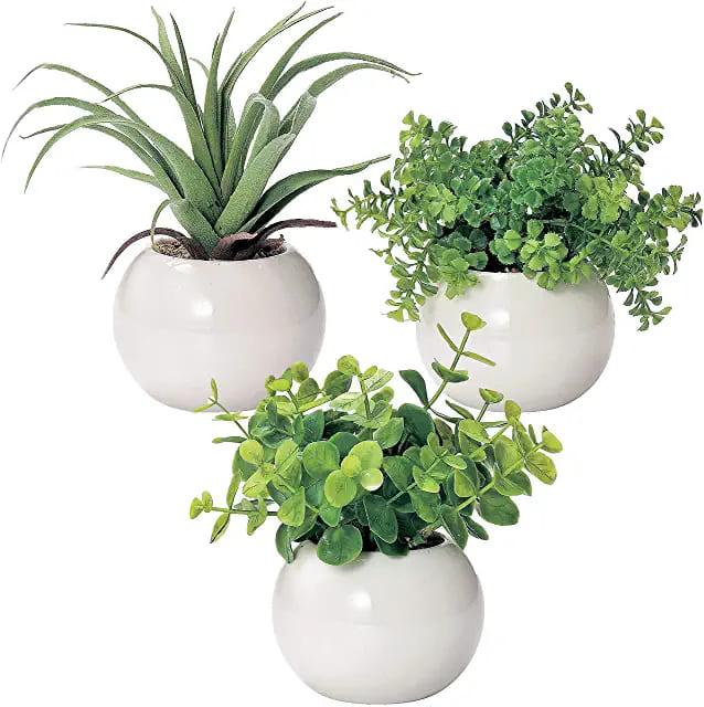 観葉植物三点セット